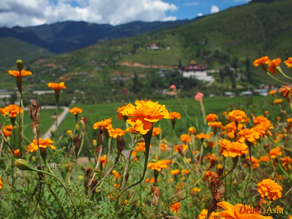Druk Asia Summer in Bhutan